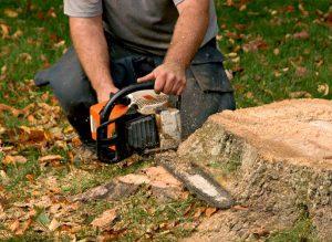 tree-stump-removal-sydney-by-stumpremovalsydney
